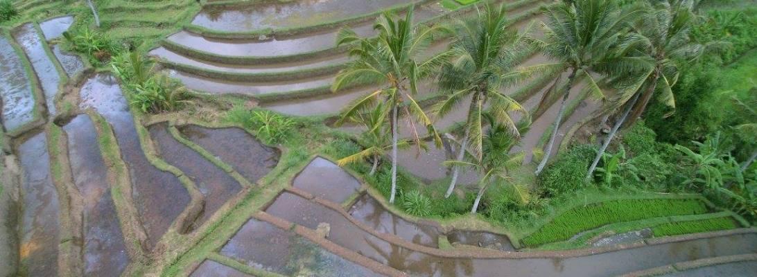 Jatiluwih rice terrace